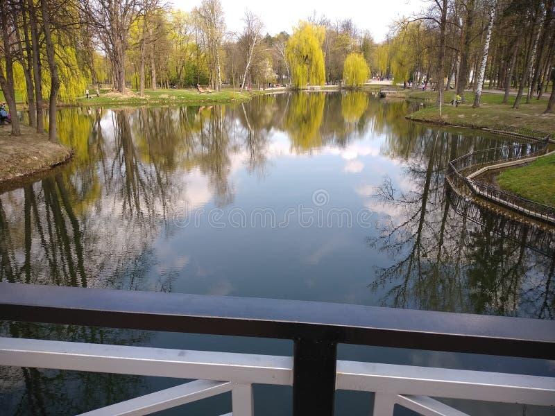 Zieleni drzewa i niebieskie niebo w miasto parku ivano-Frankivsk, Ukraina wczesna wiosna zdjęcia stock