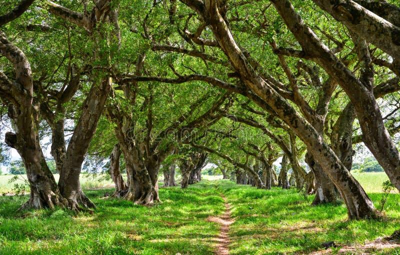 Zieleni drzewa przy słonecznym dniem w tropikalnym lesie obrazy stock
