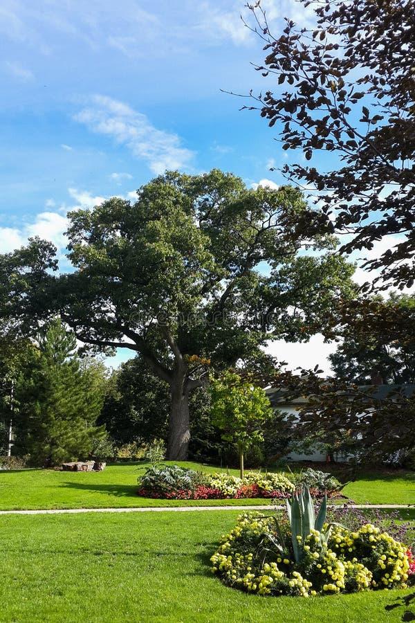Zieleni drzewa w łóżku z kwiatami i parku zdjęcia royalty free