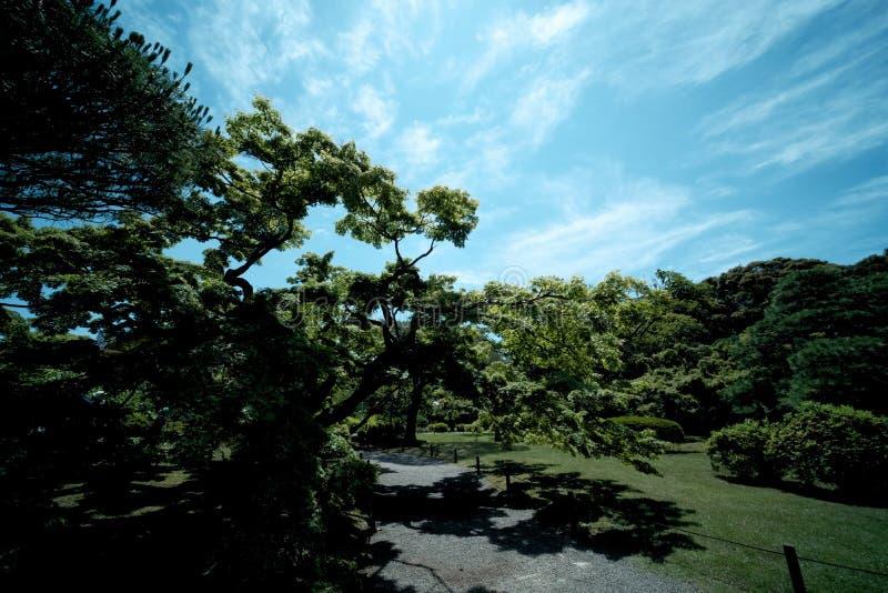 Zieleni drzewa w parkach i niebieskich niebach obrazy royalty free