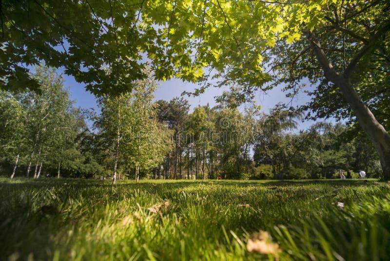 Zieleni drzewa w parku i świetle słonecznym obraz royalty free