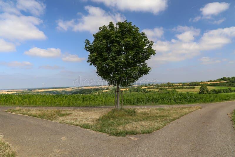 Zieleni drzewo stojaki przy rozwidleniem w drodze zdjęcie stock