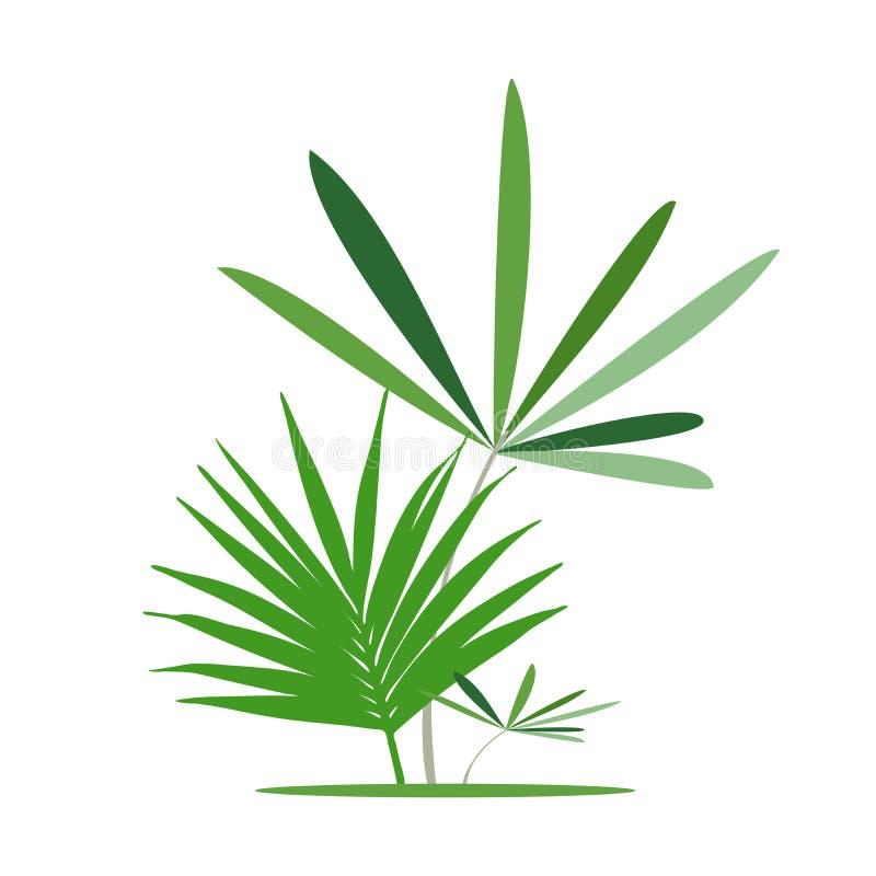 Zieleni egzotyczni liście, bananowy liść również zwrócić corel ilustracji wektora ilustracja wektor