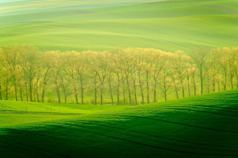 Zieleni faliści wzgórza w Południowym Moravia fotografia stock