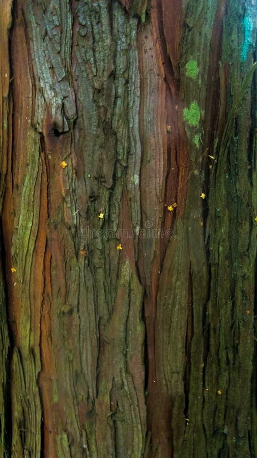 Zieleni i brązu drzewna barkentyna z pęknięciami obraz stock