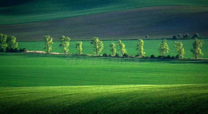 Zieleni i tirquoise wiosny pola abstrakta tło fotografia royalty free