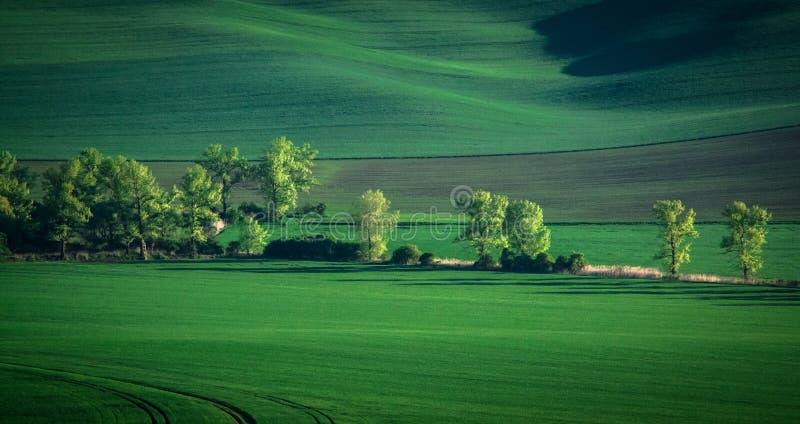 Zieleni i tirquoise wiosny pola abstrakta tło obraz royalty free