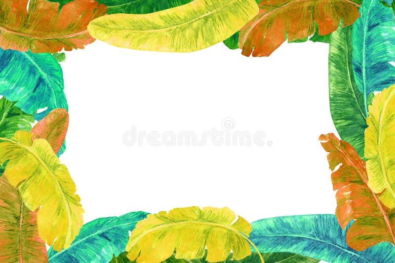 Zieleni, koloru żółtego i pomarańcze banana liście, horyzontalny kartka z pozdrowieniami lub sztandaru projekt, biały tło ilustracja wektor