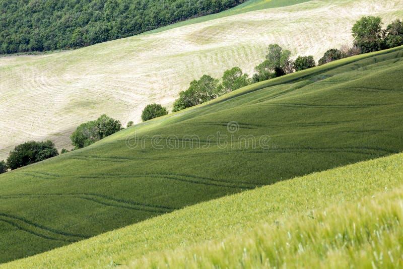 Download Zieleni kolory Tuscany obraz stock. Obraz złożonej z linie - 53784237