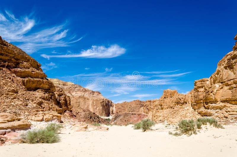 Zieleni krzaki na piasku w jarze w pustyni przeciw tłu góry i niebieskie niebo z chmurami w Egipt Dahab obraz stock