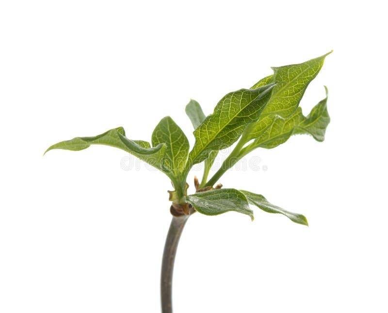 zieleni liść roślina obrazy stock