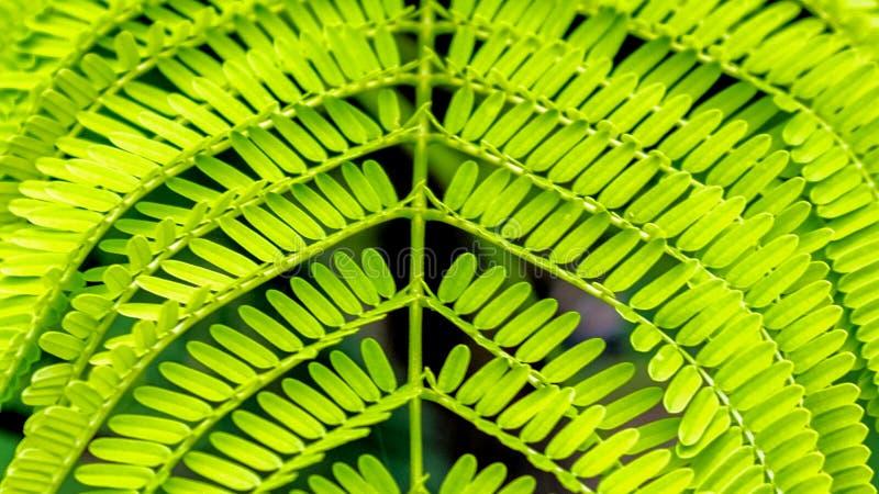 Zieleni liście paprociowy prawdziwy kolor zdjęcia stock