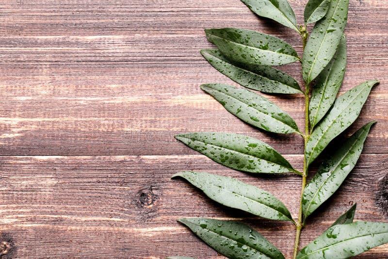 Zieleni liście z wodnymi kroplami obraz stock