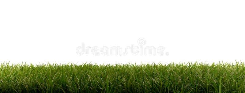 Zieleni ostrza trawa 3d-illustration odizolowywająca na bielu ilustracja wektor
