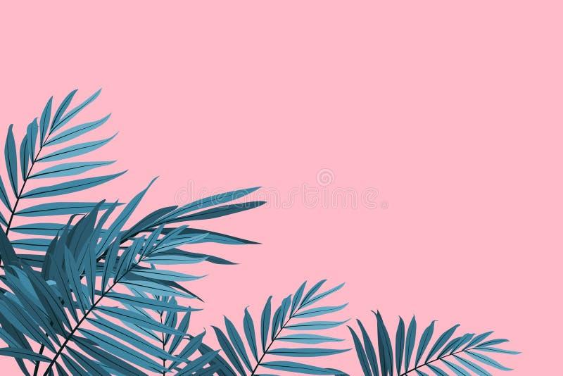 Zieleni palma liście na różowym tle Tropikalnych liści modny tło również zwrócić corel ilustracji wektora royalty ilustracja