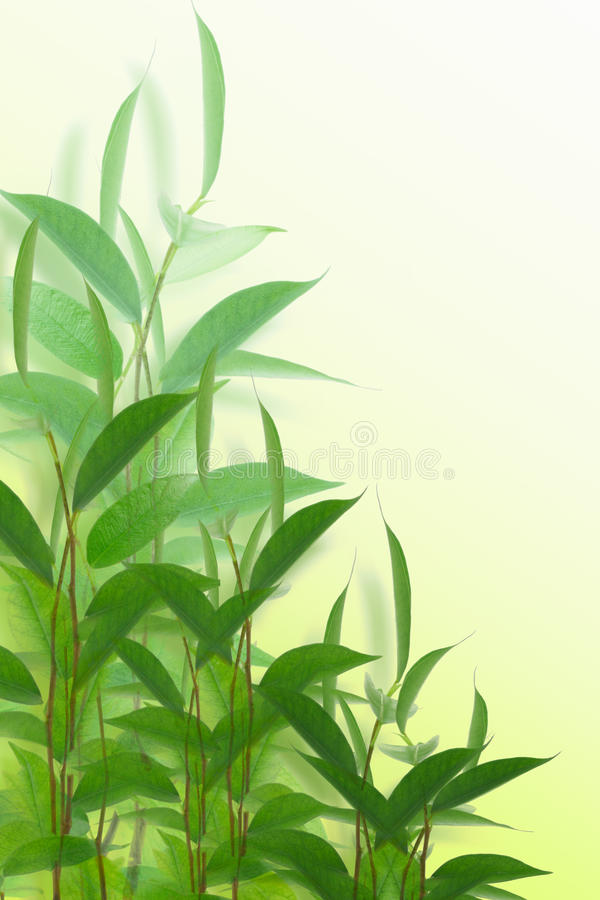 zieleni palnts fotografia stock