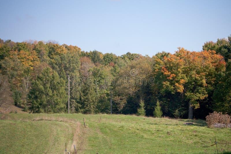 Zieleni pola i jesieni drzewa obrazy stock