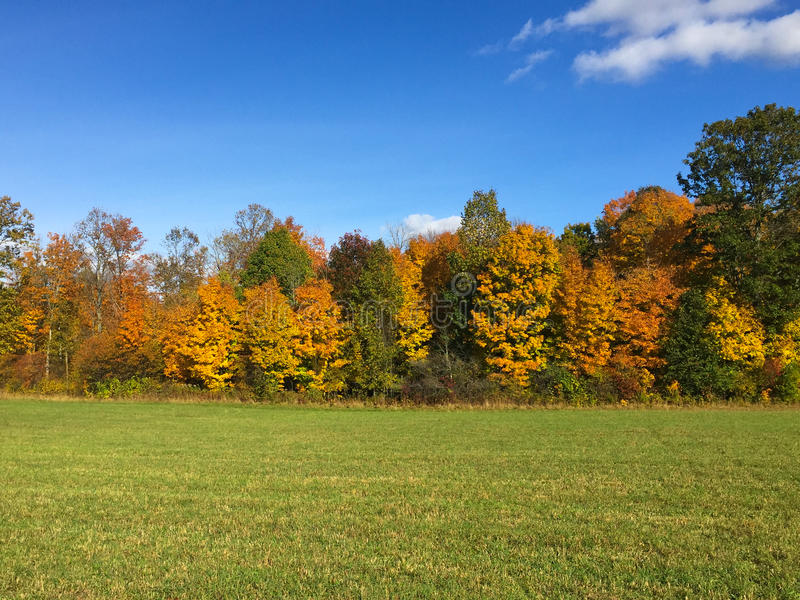 Zieleni pola jesień fotografia stock