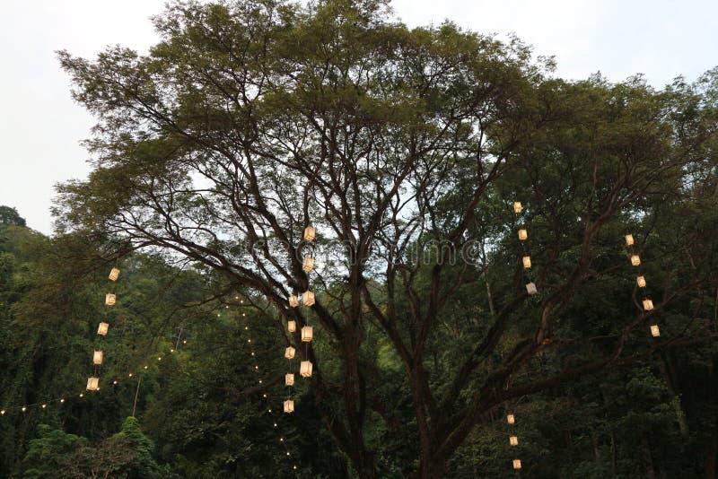 Zieleni rowns brzoza i drzewa przeciw niebieskiemu niebu w wiośnie fotografia royalty free