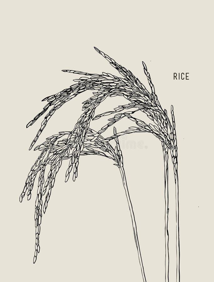 Zieleni ryż ilustracja wektor