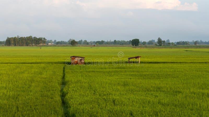 Zieleni ryż pola i stara buda zdjęcia royalty free