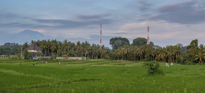 Zieleni ryż pola na Bali wyspie blisko Ubud z wulkanu backgrou zdjęcia stock