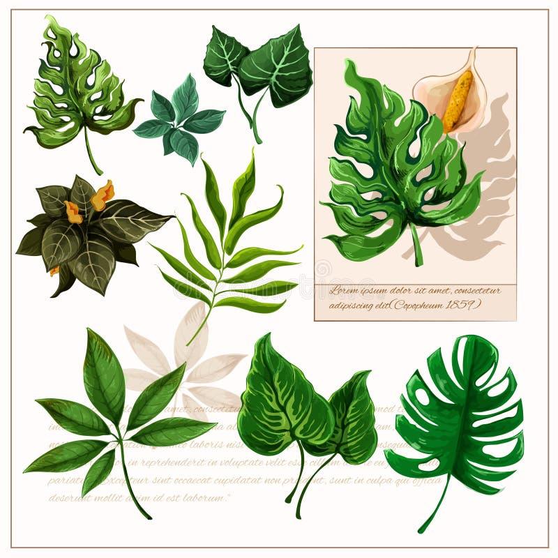 Zieleni tropikalni liści piktogramy ustawiający ilustracja wektor