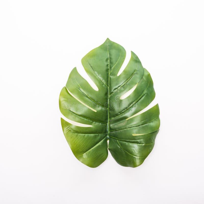 Zieleni tropikalni, palmowi liście, liść rozgałęziają się na białym tle Mieszkanie nieatutowy, odgórny widok fotografia stock