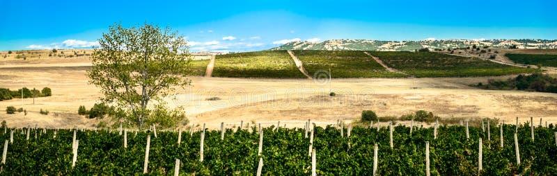 Zieleni wineyards obrazy stock