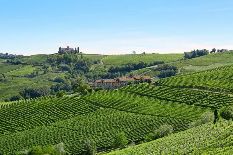 Zieleni winnicy w słonecznym dniu w Włoskim kraju, niebieskie niebo obrazy royalty free
