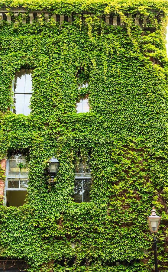 Zieleni winogrady Zakrywa budynek zdjęcia stock