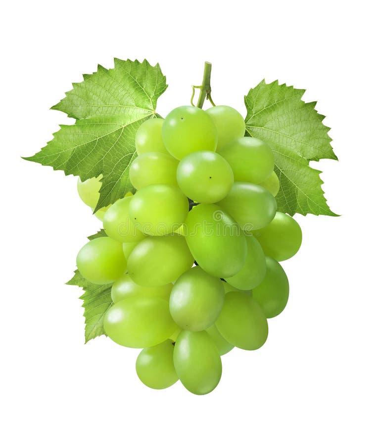 Zieleni winogrona pionowo z liśćmi odizolowywającymi na białym tle zdjęcia stock