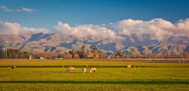 Zieleni wzgórza w wsi Malborough region w Nowa Zelandia obrazy royalty free