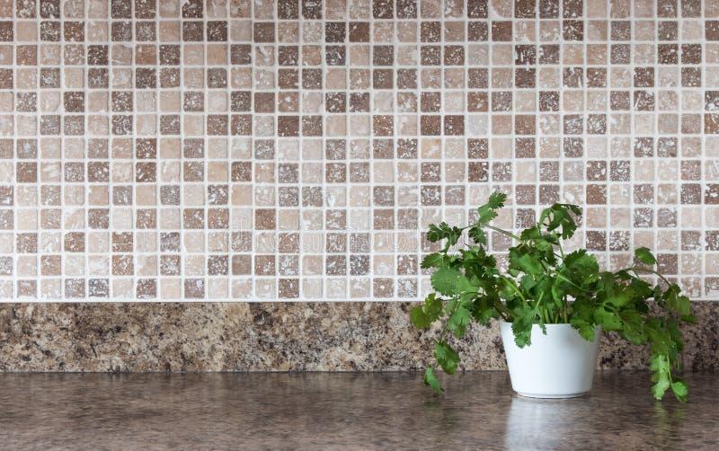 Zieleni ziele na kuchennym countertop zdjęcia royalty free