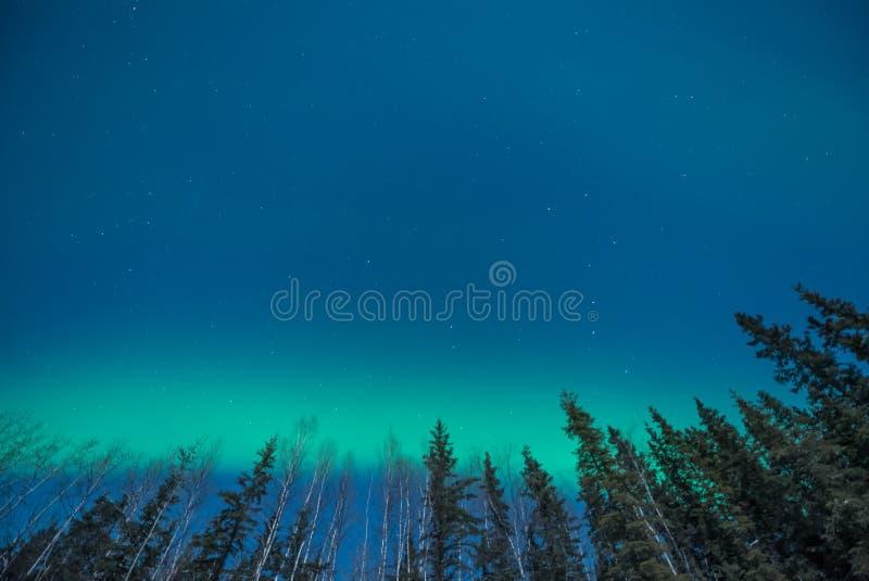 Zieleni zorz borealis na horyzoncie zdjęcia royalty free