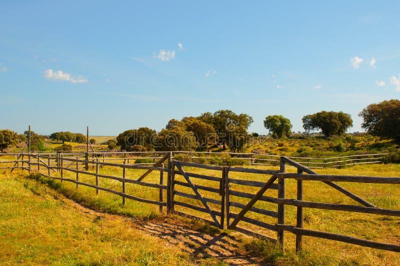 Zielenie fechtujący się pola w gospodarstwie rolnym słoneczny dzień fotografia royalty free