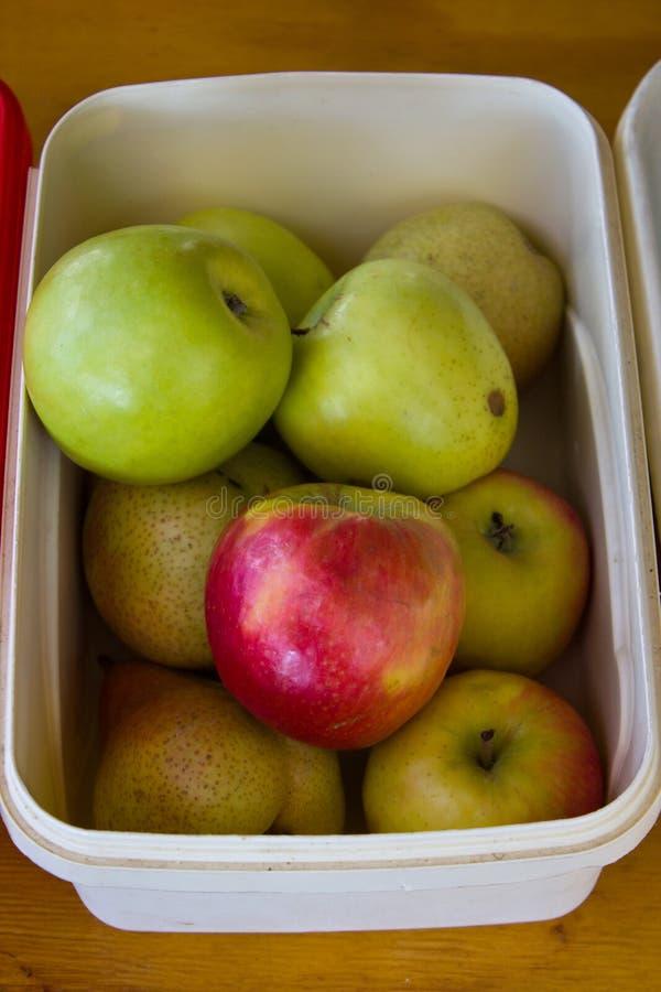 Zielenieje barwionych jabłka i bonkrety w białym plastikowym zbiorniku fotografia royalty free