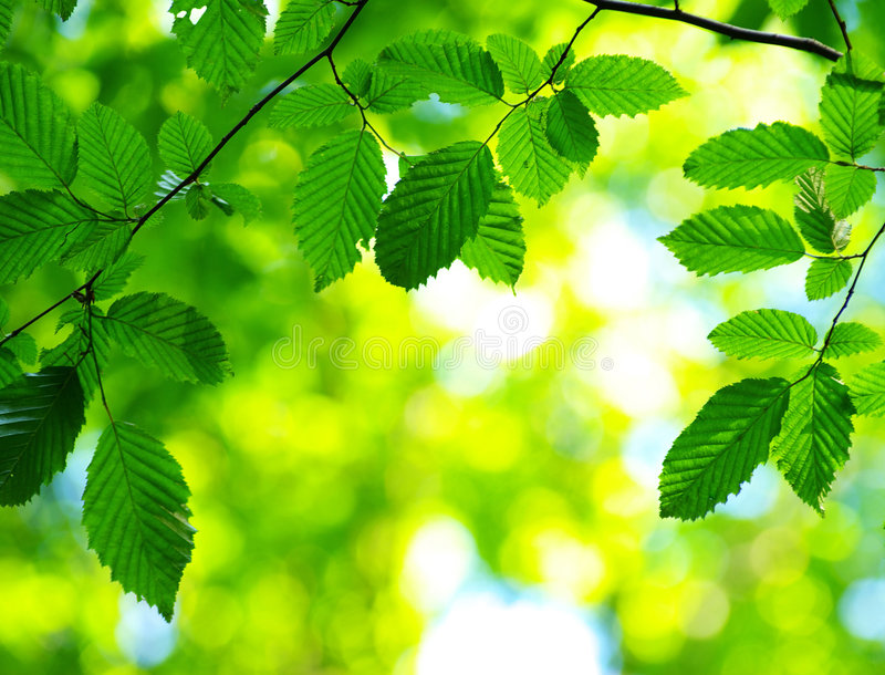 zielenieje liść zdjęcia royalty free