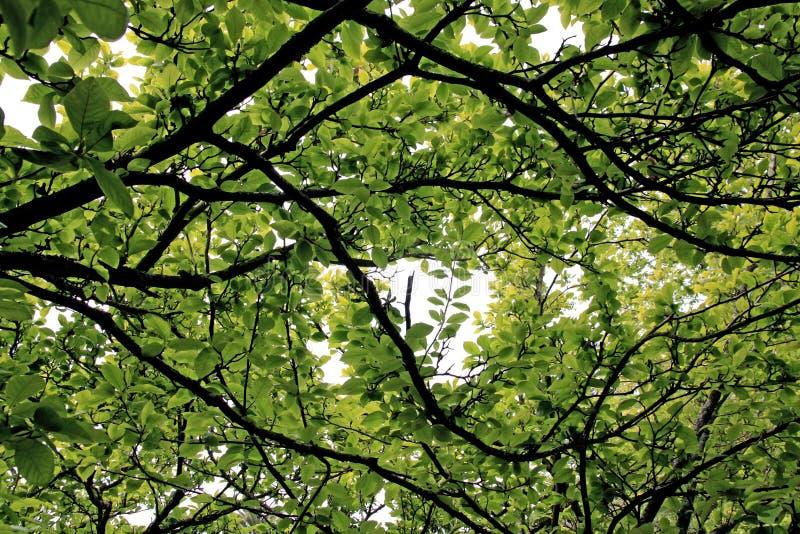 Zielenieje liść na drzewie zdjęcie stock
