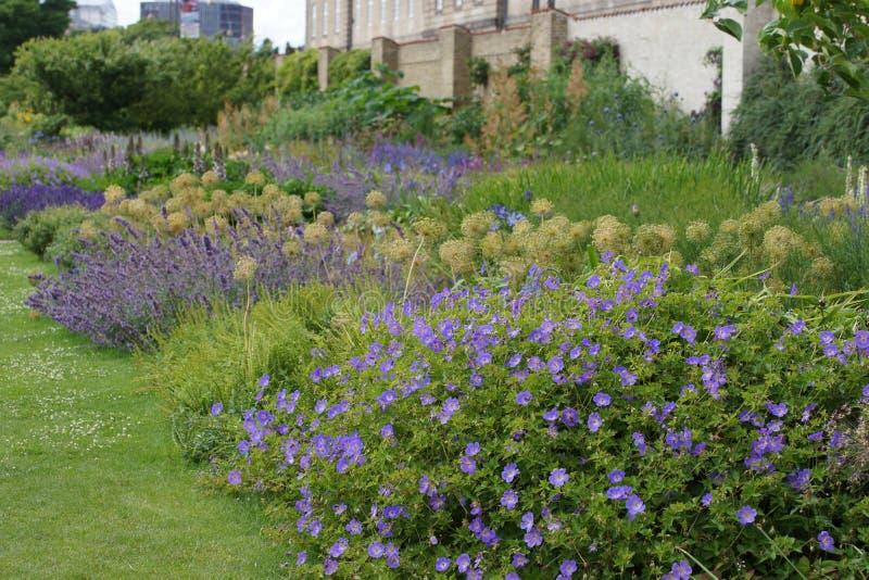 Zielna granica z bodziszkiem Rozanne i innymi błękitnymi kwiatami obrazy stock