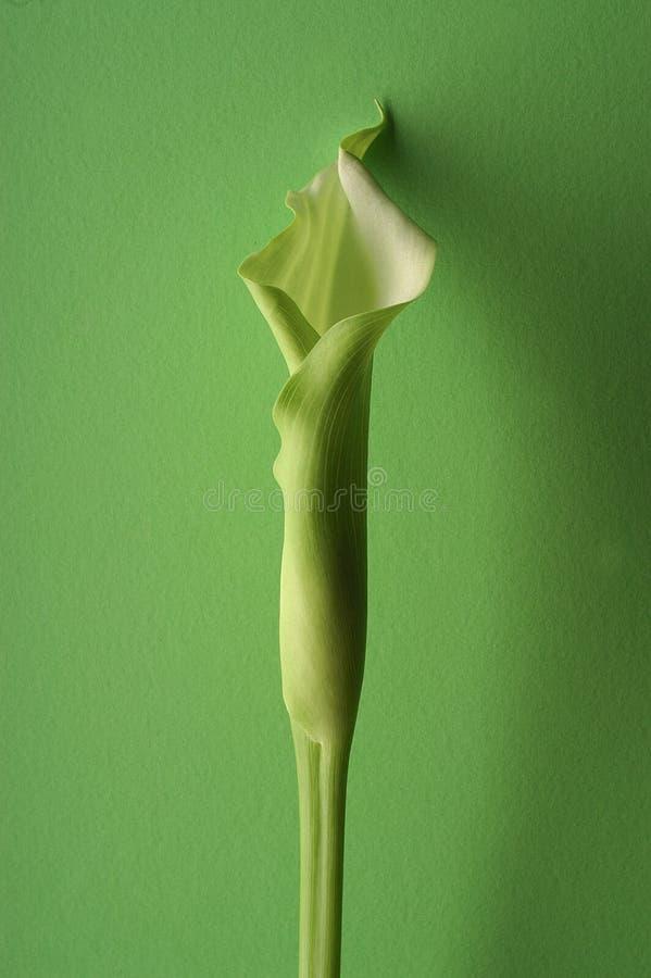zieloną obrazy stock
