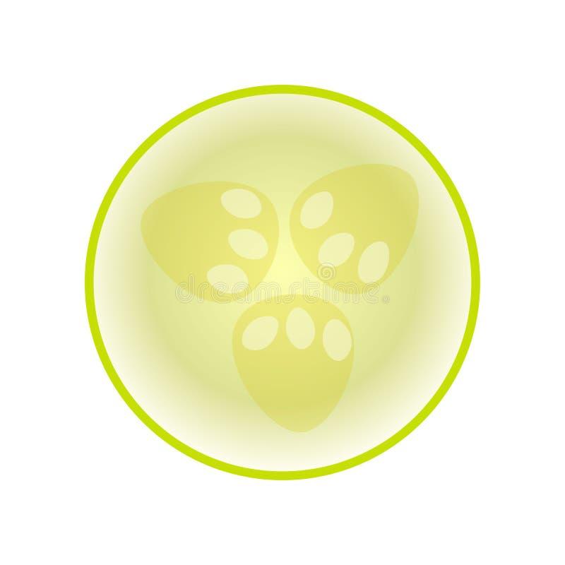 Zielona świeża zucchini połówka odizolowywająca na białym tle ilustracji