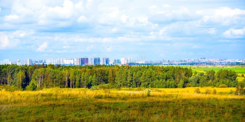 Zielona łąka i drzewo krajobraz w natura parku, piękny lato sezon zdjęcia royalty free