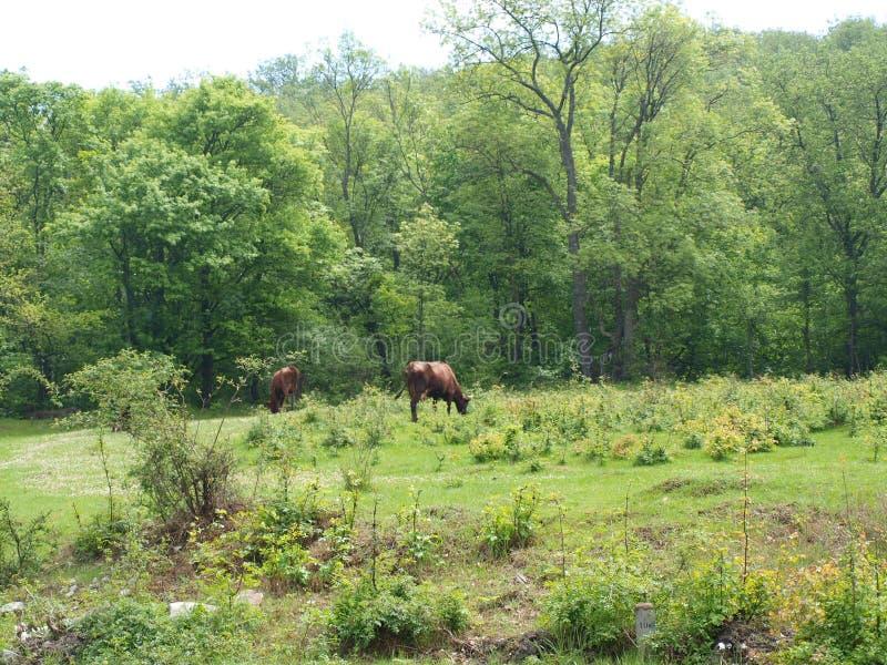 Zielona łąka IV obraz stock