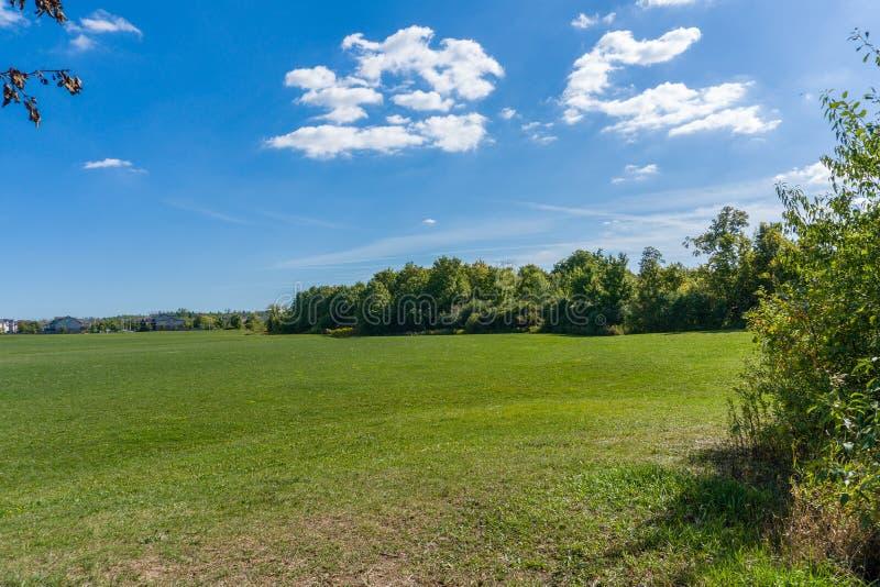 Zielona łąka letnia w pobliżu lasu zdjęcia stock