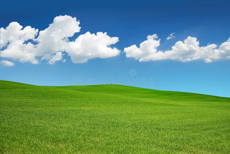 Zielona łąka pod niebieskim niebem zdjęcia stock