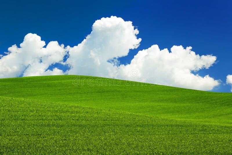 Zielona łąka toczni wzgórza obraz stock