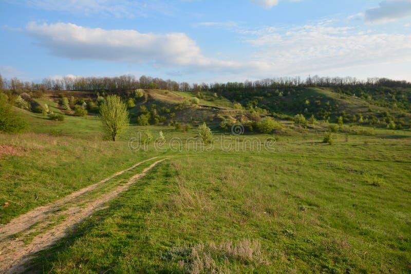 Zielona łąka w wiosny niebie obraz royalty free