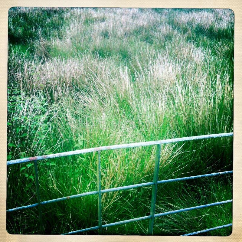 Zielona łąka Za Ogrodzeniem Zdjęcia Stock