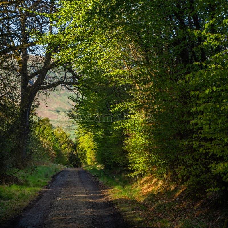 Zielona ścieżka przez drewien lub droga zdjęcia royalty free